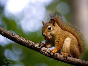 Squirrel Wallpaper - 4-3