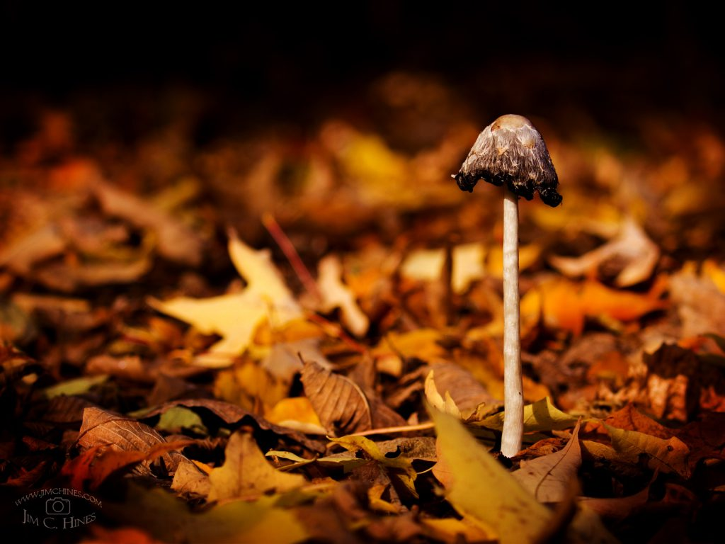 Autumn Mushroom - 4x3