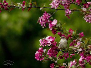 Sparrow Wallpaper - 4:3